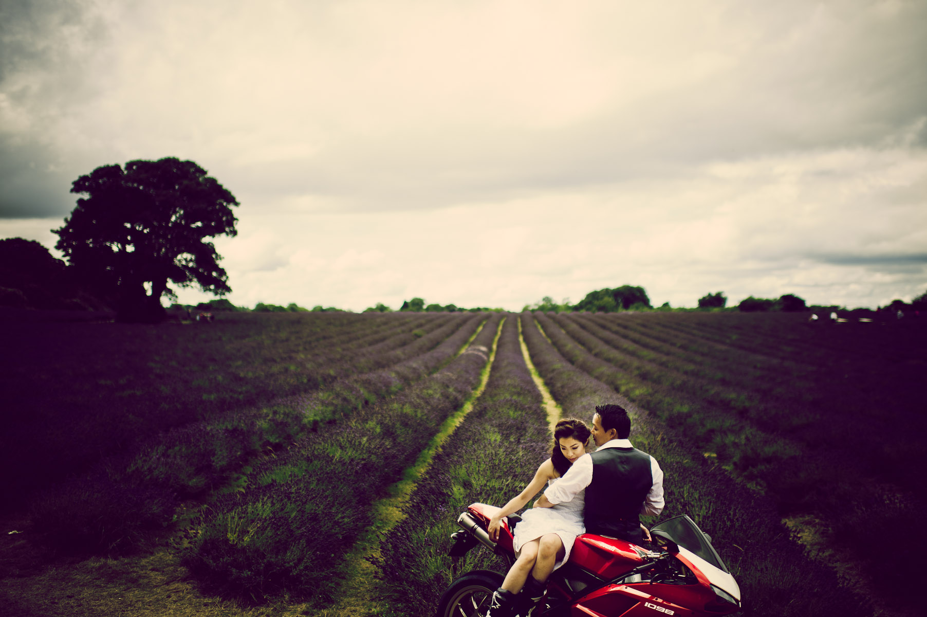 Lavender fields UK wedding photographer