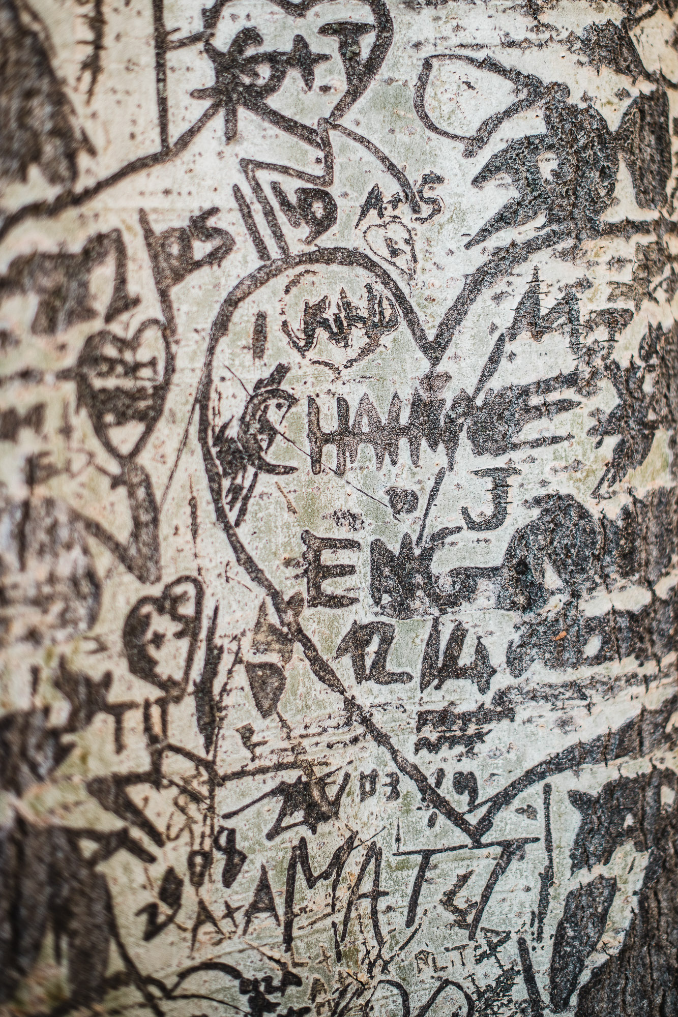 love tree in Paris