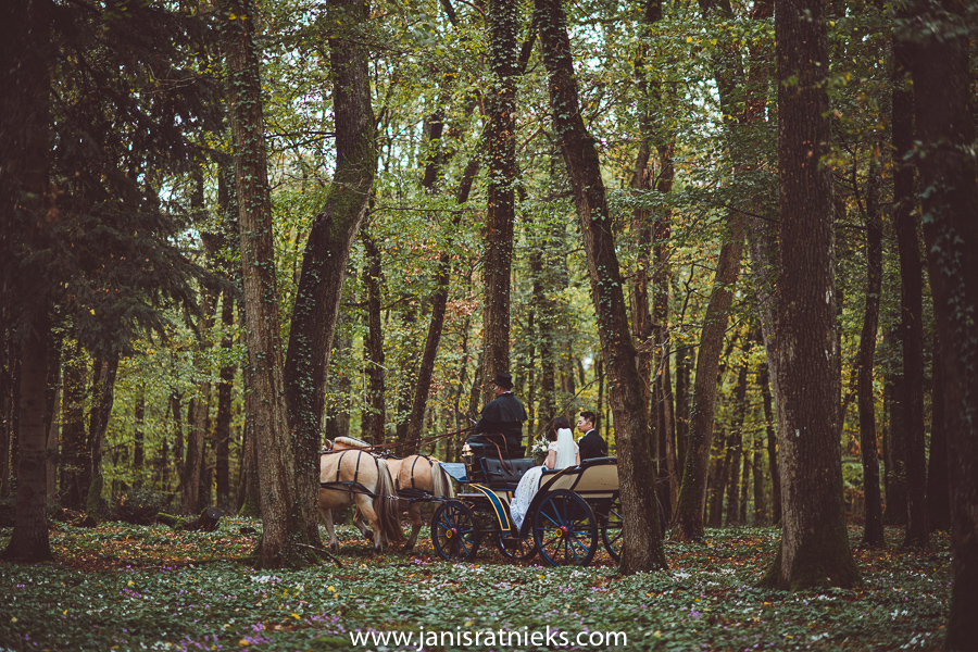 Wedding carriage driving through the woods