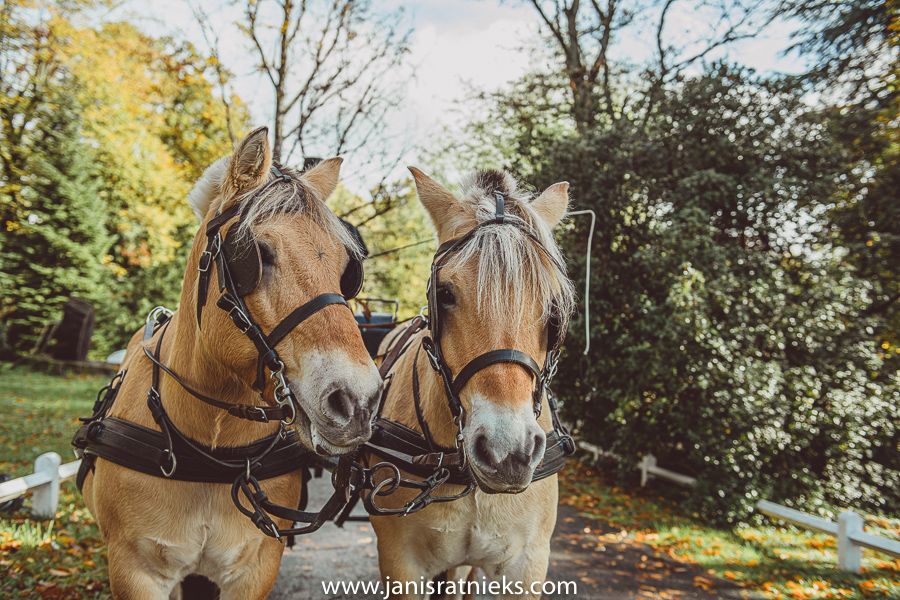 Two horses in a wedding in france