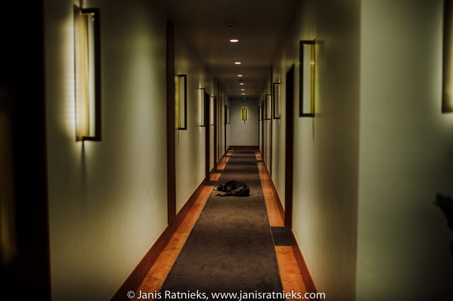 dog in the hotel