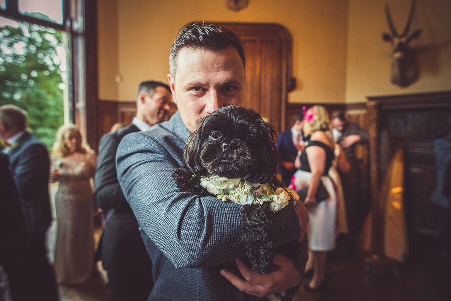 dog in a wedding in France