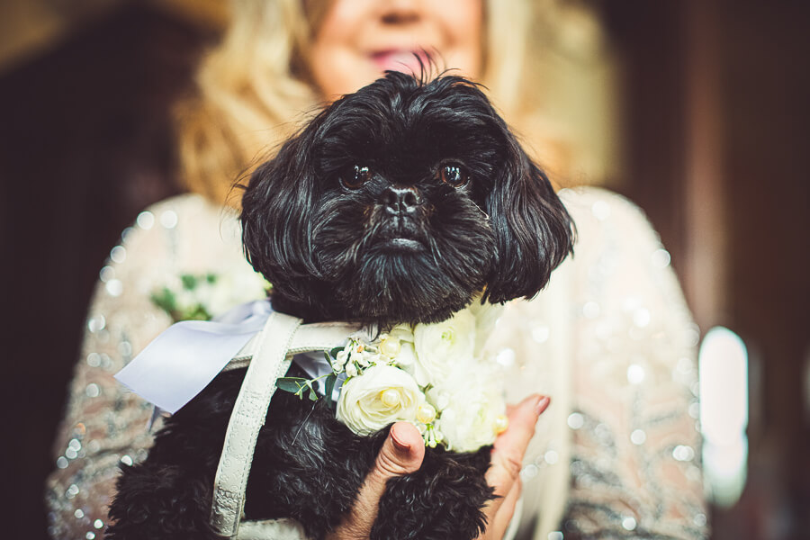 wedding dog photographer